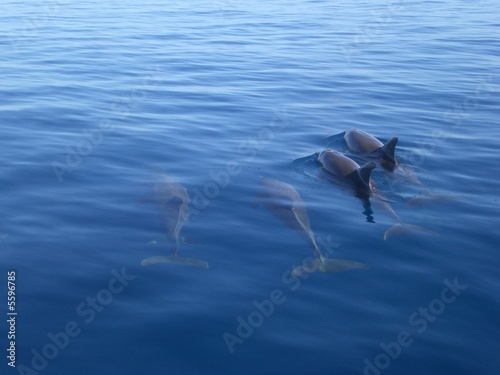 Photo dauphin