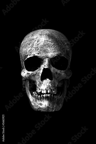 Papel de parede Crânio