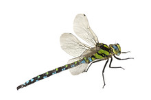 Dragonfly Close Up Isolated On...
