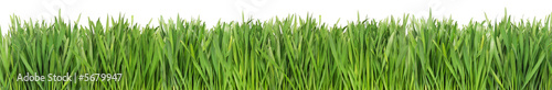 Poster de jardin Herbe Green grass isolated on white background