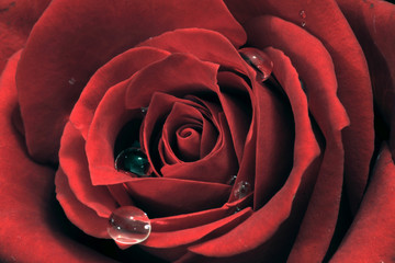 Panel Szklany Podświetlane Róże Blütentraum