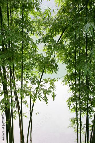 Fotobehang Bamboo bamboo