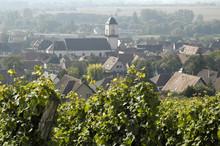 Vignoble De Marlenheim En Alsace