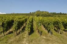 Vignoble De Marlenheim An Alsace