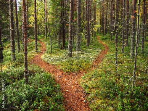 Aluminium Prints Road in forest Crossroads in the forest