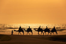Tourists Ride Camels Train On ...