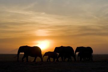 Fototapeta na wymiar elefanten3
