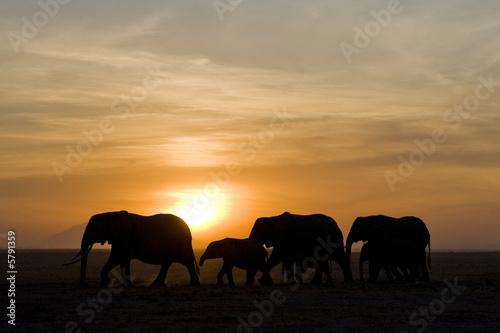 Obrazy na płótnie Canvas elefanten3