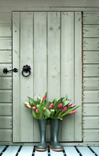 Tulips In Boots Outside Garden Shed