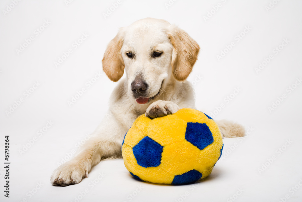Fototapety, obrazy: doggy and his ball