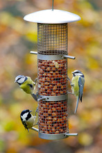 Two Blue Tits And One Willow Tit On A Bird Feeder