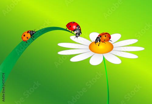 Aluminium Prints Ladybugs 3 Marienkäfer und Blume