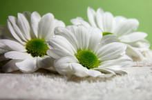 Water Drops On Daisies