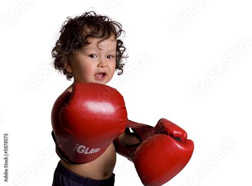 Boxer. Fototapet