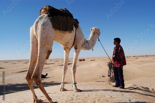 Valokuva  chamelier dans le sahara