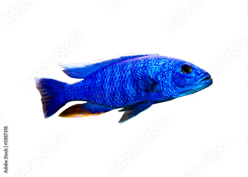tropical fish Canvas-taulu