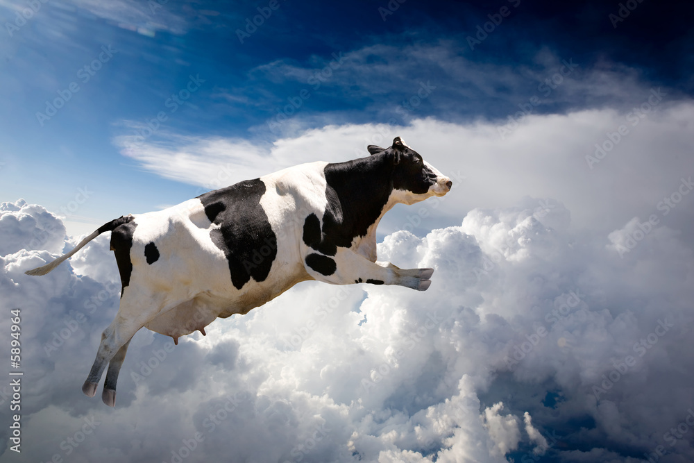 Fototapeta A super cow flying over clouds