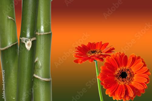 Foto-Schiebegardine ohne Schienensystem - Wellness Blüten Bambus