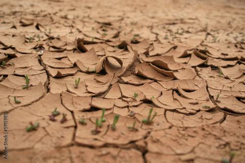 Surriscaldamento - Terreno arido Canvas Print