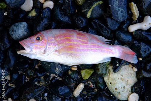 Fotobehang Fish open mouth