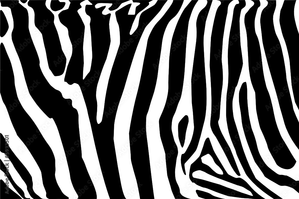 Fototapety, obrazy: vector - zebra texture Black and White