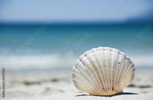Fotografie, Obraz  Beach concept. Sea shell with ocean on background.