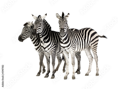 Photo Stands Zebra Zebra