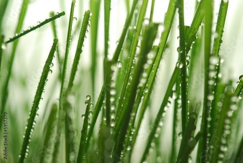 Naklejka na szybę Krople wody na trawie