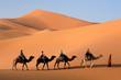 Leinwandbild Motiv Camel caravan going the sand dunes in the Sahara Desert