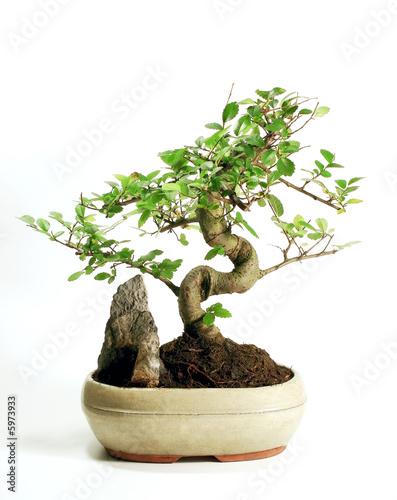 Keuken foto achterwand Bonsai Bonsai
