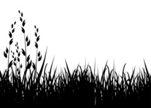 Grass Vector Illustration / Ho...