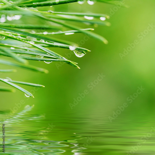 Fotografie, Obraz  Morning dew on pine needles reflected in rendered water
