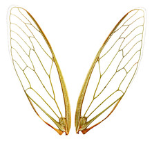 A Pair Of Cicada Wings, With C...