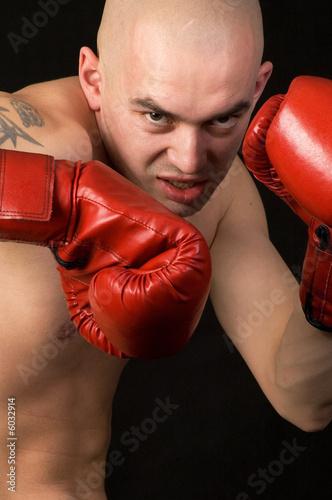 Boxer. Tablou Canvas