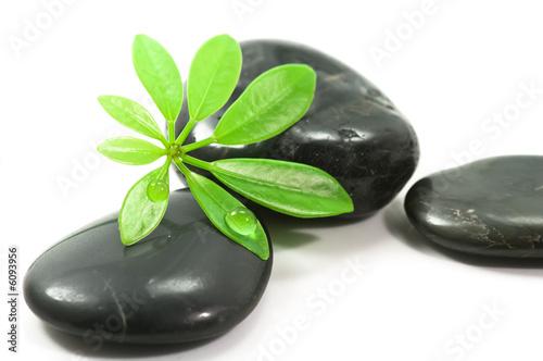 Doppelrollo mit Motiv - Therapy stones