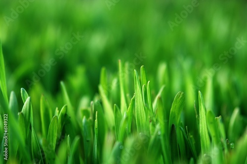 Acrylic Prints Green healthy grass