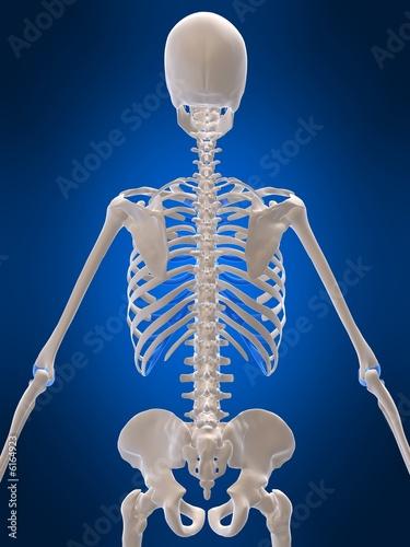 rückenansicht eines menschlichen skeletts – kaufen Sie diese ...