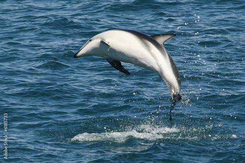 Foto op Plexiglas Dolfijnen Dauphin