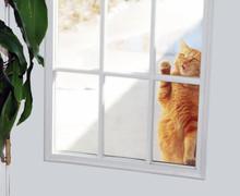 Cat Knocker