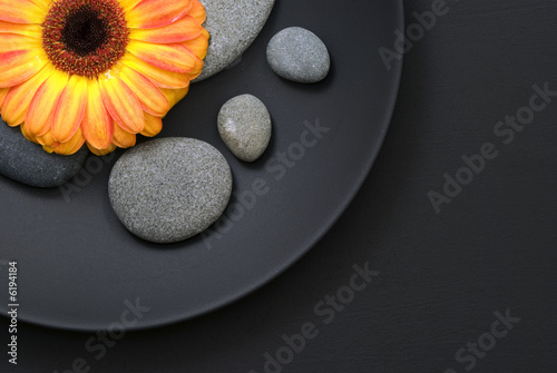 Akustikstoff - Gerberablüte auf Teller