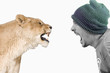 lionne vs humain