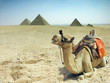 canvas print picture Symbol Egypt's - Cairo, Giza - camel with pyramids