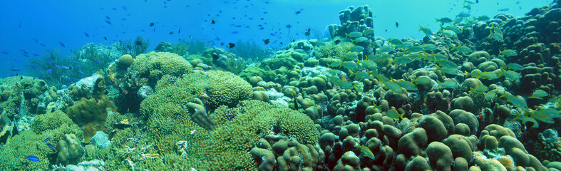 Underwater panoramic