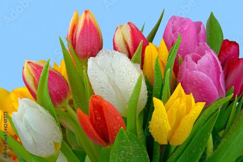 Plakat Świeży tulipanowy bukiet z rosą