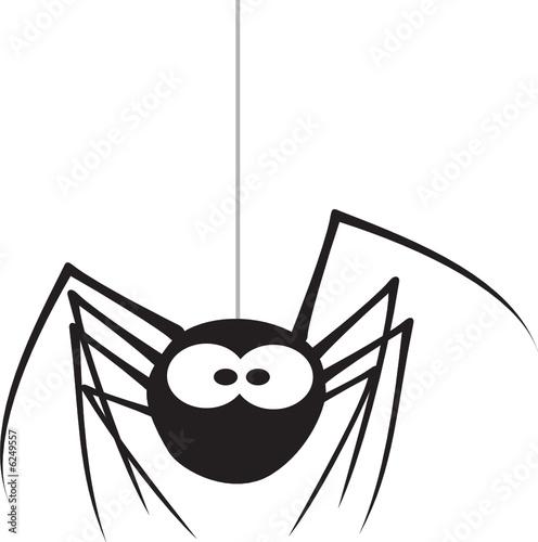 Spider #6249557