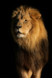 canvas print picture - Big male African lion (Panthera leo)