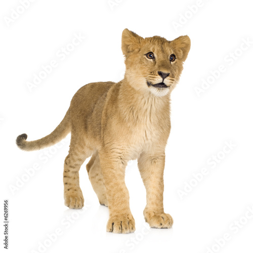 Poster Puma in front of a white background