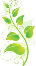 Environmentally Friendly Green Vine With Leaves
