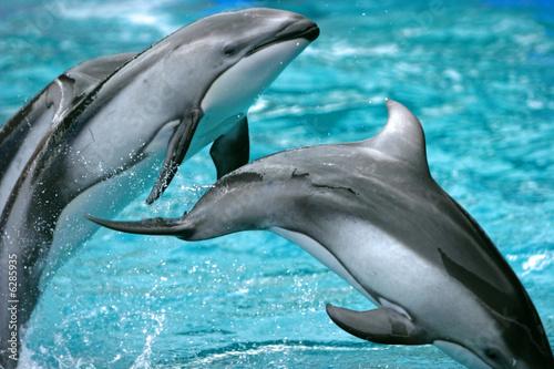 Foto op Plexiglas Dolfijnen jumping fish