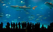 World's Largest Acrylic Aquarium